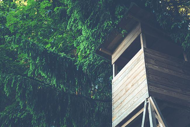 Сделайте домик на дереве